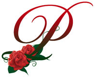 Letter P red floral  illustration. Red rose decorated Letter P font , colorful and Stock Photos