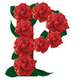 Letter P red roses  illustration Royalty Free Stock Images