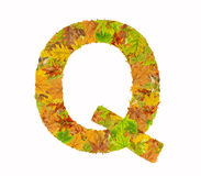 The letter Q of alphabet made of autumn leaves Royalty Free Stock Photography