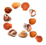 Letter Q composed of seashells Royalty Free Stock Photos