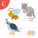 Letter Q. Cute animals. Funny cartoon animals in vector.  Royalty Free Stock Photos