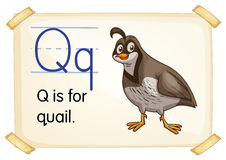 Letter Q. Illustration of a flashcard with letter Q vector illustration