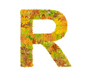 The letter R of alphabet made of autumn leaves Royalty Free Stock Photos