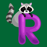 Letter R with animal raccoon for kids abc education in preschool. Raccoon animal and letter R for kids abc education in preschool.Cute animals letters english Royalty Free Stock Images