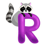Letter R with animal raccoon for kids abc education in preschool. Raccoon animal and letter R for kids abc education in preschool.Cute animals letters english Stock Image