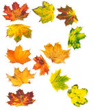 Letter R composed of autumn maple leafs Stock Photos