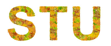 The letter S, T, and U of alphabet made of autumn leaves Royalty Free Stock Photography