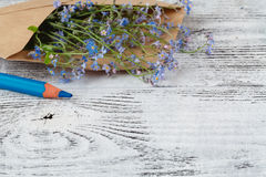 Letter from spring. Forget-me-not Stock Photography