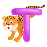 Letter T with tiger animal for kids abc education in preschool. Tiger animal and letter T for kids abc education in preschool.Cute animals letters english Royalty Free Illustration