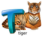 A letter T for tiger Stock Image