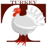LETTER T (turkey) Royalty Free Stock Photo