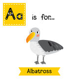 A letter tracing. Albatross. Stock Photos