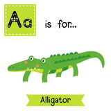 A letter tracing. Alligator. Cute children zoo alphabet flash card. Funny cartoon animal. Kids abc education. Learning English vocabulary. Vector illustration Royalty Free Stock Photography