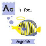 A letter tracing. Angelfish. Stock Images