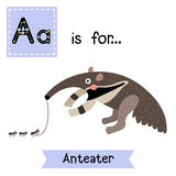 A letter tracing. Anteater. Cute children zoo alphabet flash card. Funny cartoon animal. Kids abc education. Learning English vocabulary. Vector illustration Stock Image