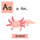A letter tracing. Axolotl. Royalty Free Stock Photos