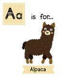 A letter tracing. Dark brown Alpaca. Stock Image