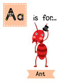 A letter tracing. Fire ant. Cute children zoo alphabet flash card. Funny cartoon animal. Kids abc education. Learning English vocabulary. Vector illustration Stock Image