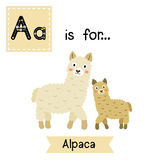 A letter tracing. Mom and child Alpaca. Royalty Free Stock Photos