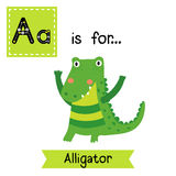 A letter tracing. Standing Alligator. Cute children zoo alphabet flash card. Funny cartoon animal. Kids abc education. Learning English vocabulary. Vector stock illustration