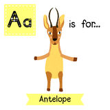 A letter tracing. Standing Antelope. Royalty Free Stock Photo