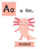 A letter tracing. Standing Axolotl. Stock Images
