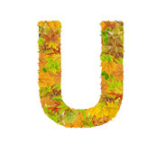 The letter U of alphabet made of autumn leaves Royalty Free Stock Photography