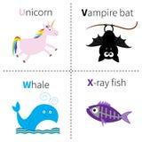 Letter U V W X Unicorn Vampire Bat Whale X-ray Fish Zoo Alphabet. English Abc With Animals Education Cards For Kids White Royalty Free Stock Photo