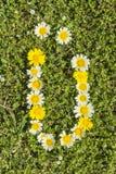 Letter UE flower alphabet Royalty Free Stock Image