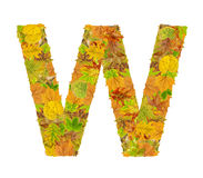 The letter W of alphabet made of autumn leaves Royalty Free Stock Images