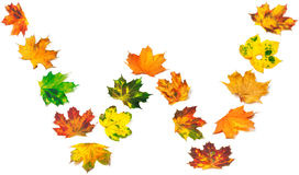 Letter W composed of autumn maple leafs Stock Photos