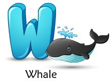 Letter W is for Whale cartoon alphabet. Illustration of Letter W is for Whale cartoon alphabet Stock Illustration