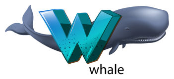 A letter W for whale Royalty Free Stock Photos