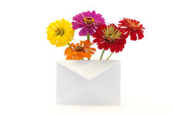 Letter for the woman. Letter with the flowers for the woman Stock Image