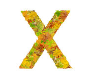 The letter X of alphabet made of autumn leaves Stock Image