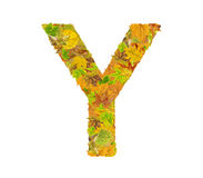 The letter Y of alphabet made of autumn leaves Royalty Free Stock Images