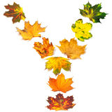 Letter Y composed of autumn maple leafs Stock Photography