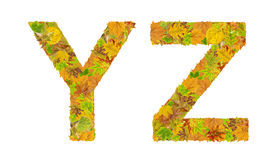 The letter Y and Z of alphabet made of autumn leaves Stock Images