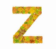 The letter Z of alphabet made of autumn leaves Royalty Free Stock Photo