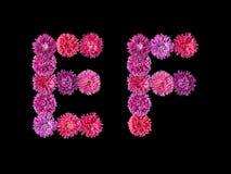 Lettera E, F dagli aster luminosi Fotografie Stock Libere da Diritti