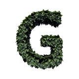 Lettera verde G del fogliame illustrazione di stock