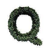 Lettera verde Q del fogliame illustrazione vettoriale
