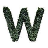 Lettera verde W del fogliame illustrazione di stock