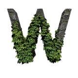 Lettera W fogliame/della pietra illustrazione vettoriale