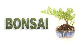 Lettere dei bonsai con l'insegna conservata in vaso dell'albero Immagine Stock