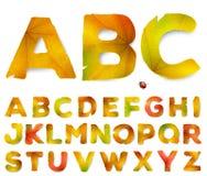 Lettere di alfabeto di vettore fatte dalle foglie di autunno Immagini Stock Libere da Diritti