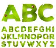 Lettere di alfabeto di vettore fatte dalle foglie verdi Immagine Stock