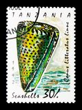 Lettered Cone Conus literatus, Sea snails and mussels serie, c. MOSCOW, RUSSIA - JANUARY 2, 2018: A stamp printed in Tanzania shows Lettered Cone Conus literatus Stock Images