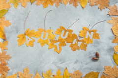 Lettering autumn on maple leaves with leaf frame on a concrete b Royalty Free Stock Photo