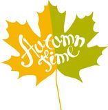 Lettering Autumn time on bright maple leaf on white, vector Royalty Free Stock Photography